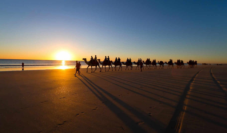 красивые, природа, free, прохождение, животных, camel, фотографий, desktop,
