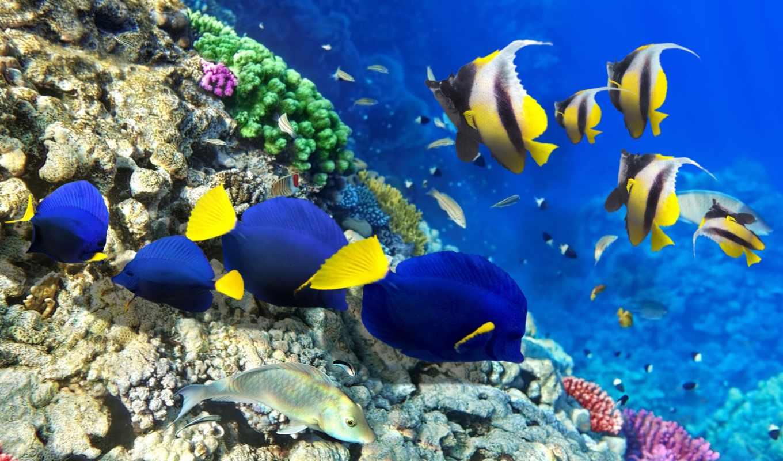 радуга, world, риф, coral, коралловых, рифов,