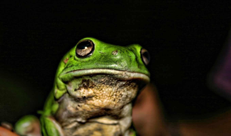 toad, лягушка, темно,