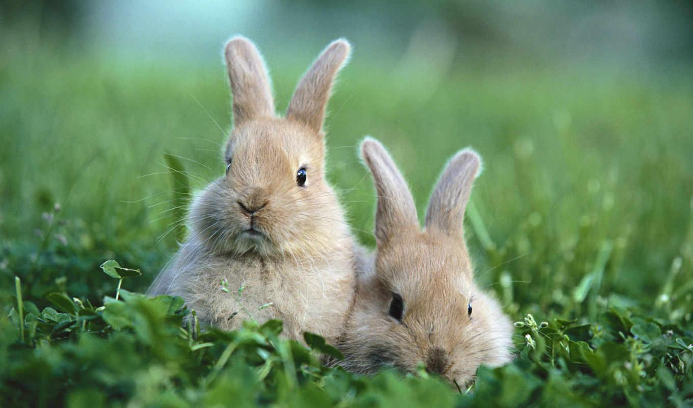 текстура, трава, розовый, кролик, зайцы, wpapers, кролики, кролика,