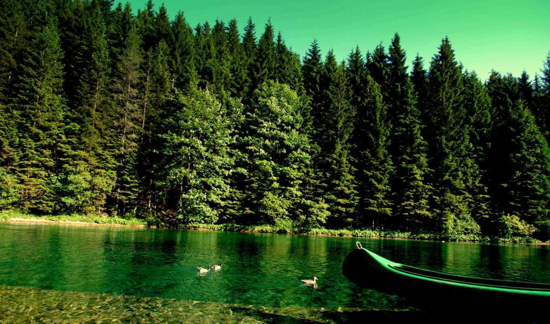 лес, природа, массив, река, fore, лодка, landscape, utkat