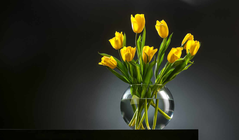 gullar, тюльпан, yellow, цветок, цветы, гуль, букет, warna, entcoff, бутон, лола