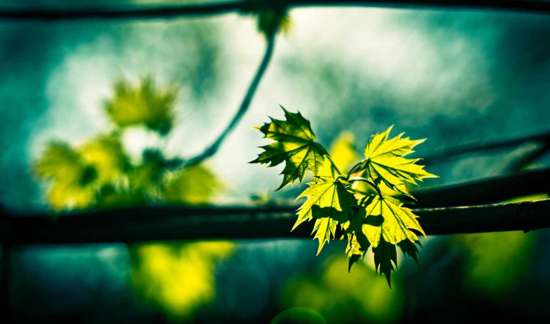 макро, ngày, mới, vui, cellbass, sống, thơ,
