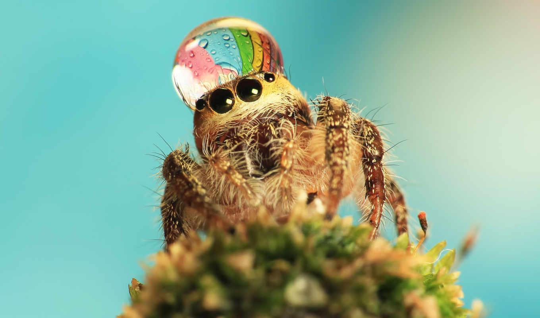water, fancy, spider, hat, drop, spiders, jumping, wearing, hats, wears, drops,