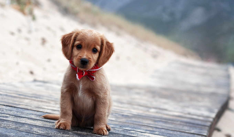 щенок, dogs, собака, щенки, portrait, animals, щенков, фото,