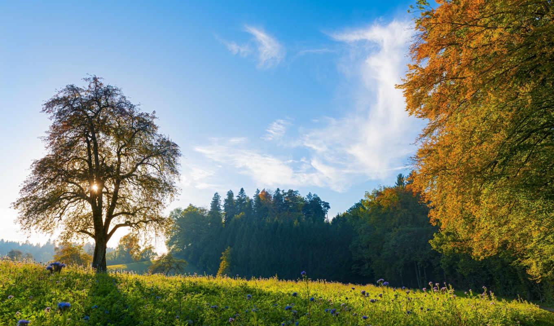 швейцария, деревя, швейцария, lug, небо, kartinka, priroda,