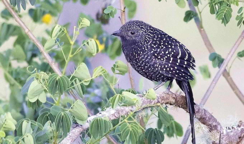birds, oiseaux, ave, png, fowl, galinha,