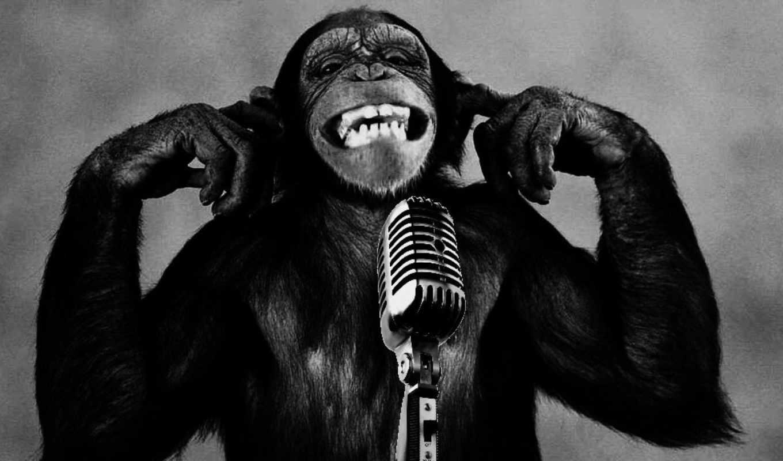 funny, pictures, captions, обезьяна, микрофон,