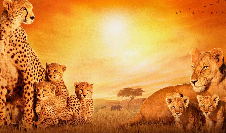 животные, african, animals, африка, that,