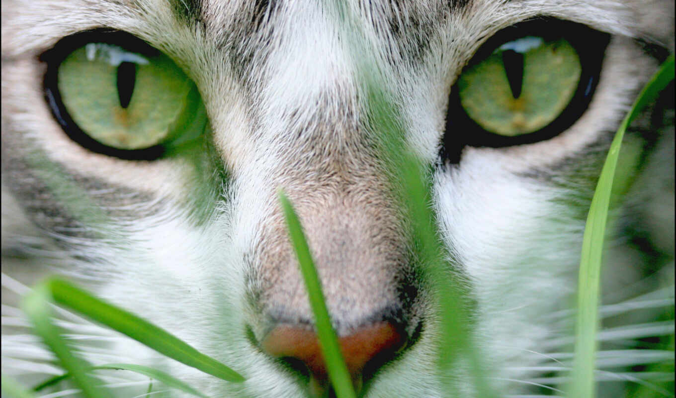 grass, cat, wallpaper, to, and, animals, is, can,