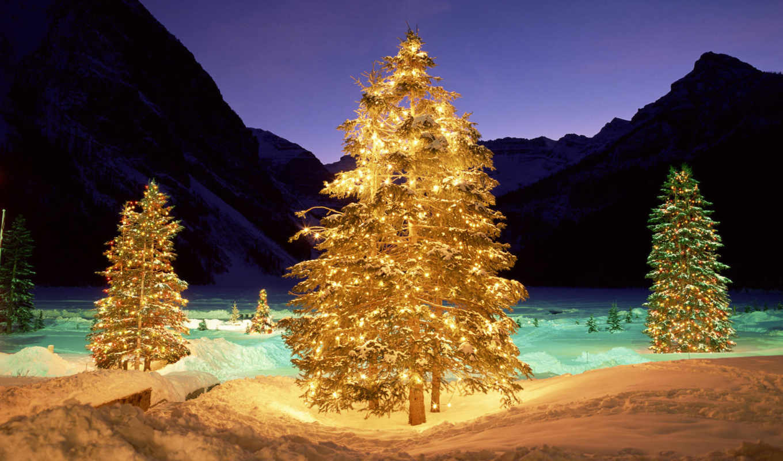 дерево, подсветка, снег, ночь, winter, свет, огни, телефон,