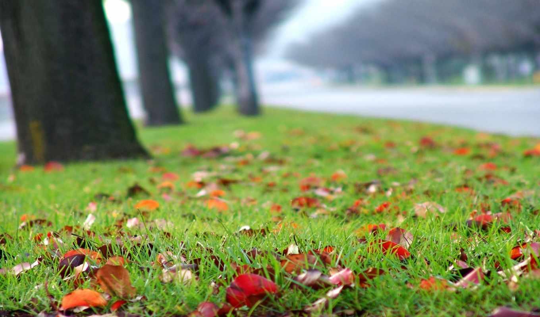 листья, осень, трава, газон, опавшие, размытость, года, дорога, time,