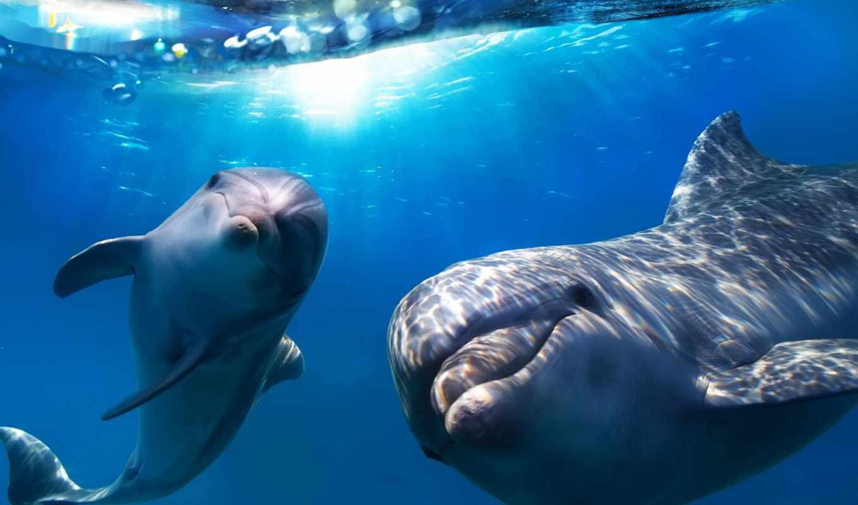 dolphins, море, water, животные, sun, conviction,