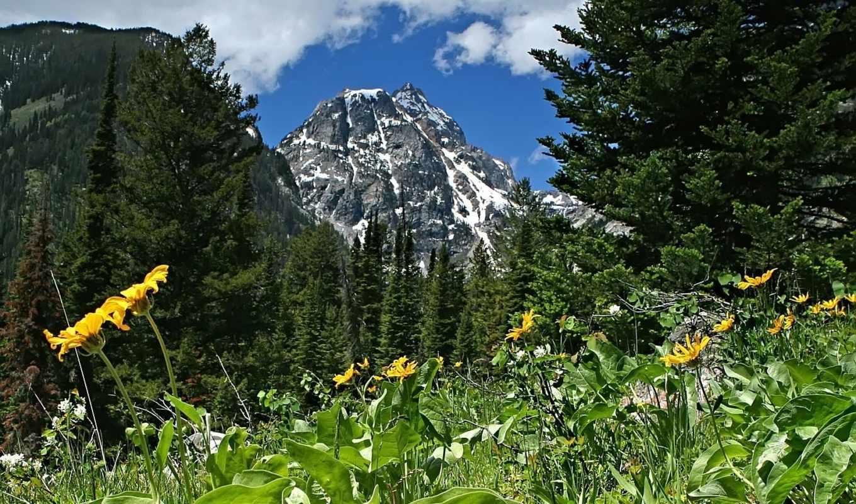горы, пейзажи, цветы, склоне, монитор, тыс,