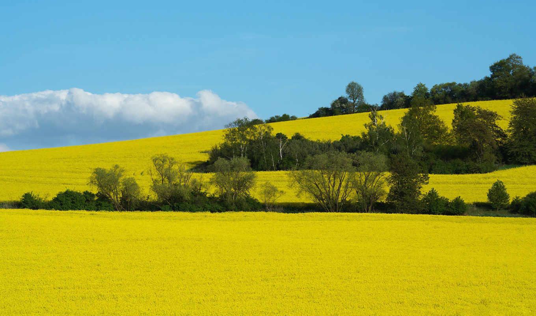 поля, природа, поле, art, landscapes, free, definition,