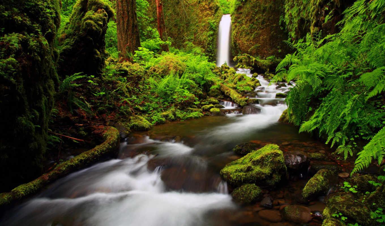 природа, леса, водопады, обою, истинном, смотреть, размере, реки,