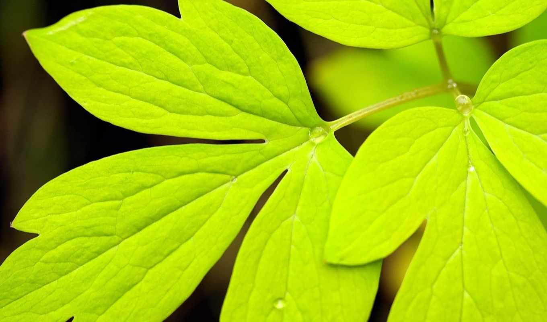 зелёный, color, капли, роса, природа, лист,