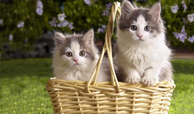 коллекция, страница, фотографий, world, кошки, cats,