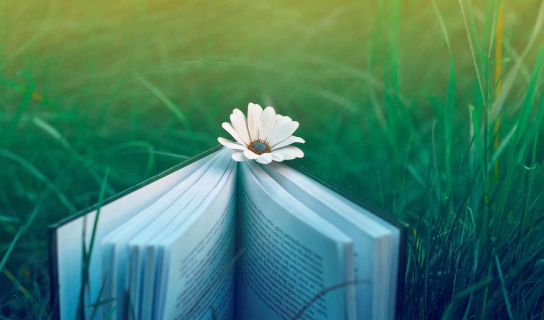 книга, цветы, трава, ромашка, природа, ipad, cvety, настроение,