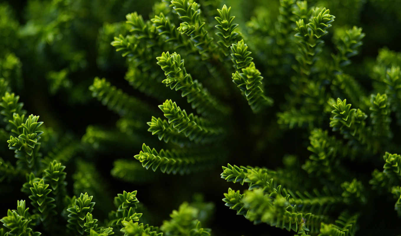 ,, растительность, зеленый, завод, наземное растение, природа, лист, vascular plant, биом, цветок, ботаника,