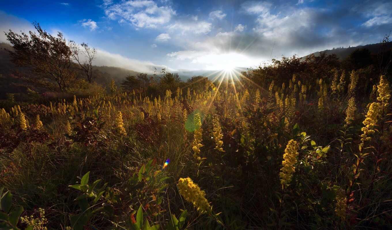 landscape, kune, pic, petaled, bidang, natural, rbole, hoja, цветы, водопад, amarilla