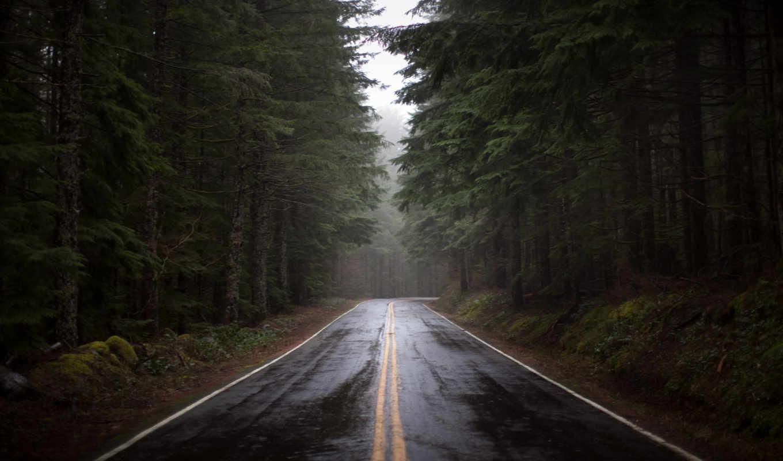 лес, дорога, природа, мокрая, трасса, темный, густой, ели, деревья, сосны, просмотреть, осень, водопад, асфальт, мокрый, картинку,