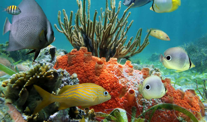 coral, world, underwater, животные, рыбы, stock, риф,