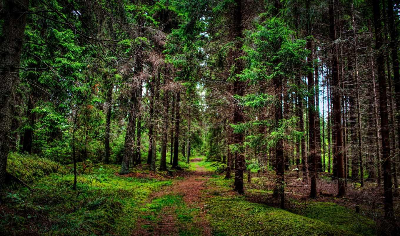 деревья, природа, леса, осень, времена, года, тропинка, нов, обою, смотреть, размере, истинном,