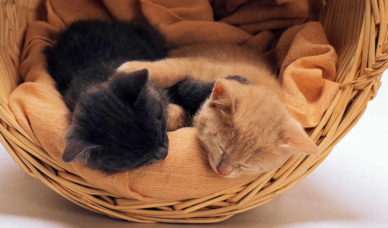 kittens, спящие, black, red, ones, корзина,