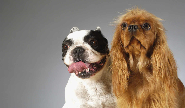 смешные, собаки, заставки,