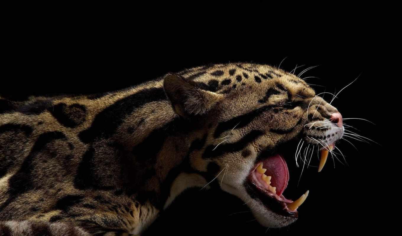 кошки, большие, кошек, vincent, musi, больших, тигров, диких,