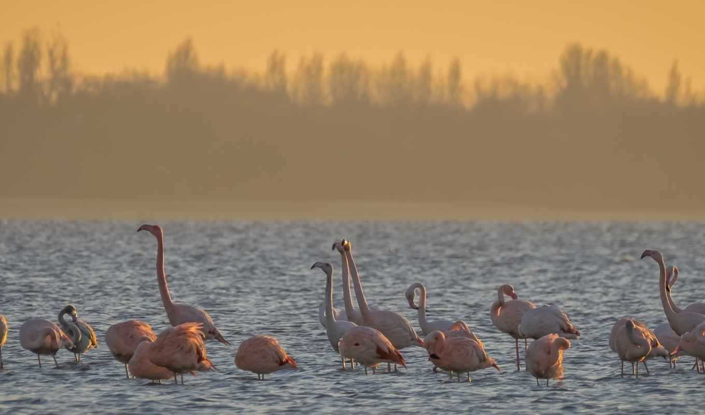 птицы, und, birds, flamingos, vögel, планшетный,