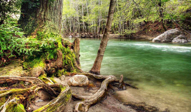 wallpaper, лес, река, forest, речка, дерево, hd, коряга, wallpapers, hdr, widescreen, корни, природа, берегу, деревья, картинку, river, wood, nature,