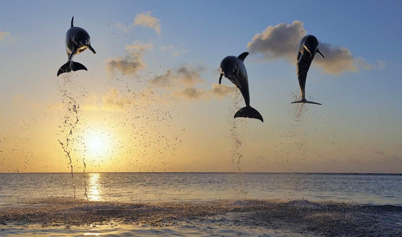 дельфинов, дельфины, животные, небо, солнце, море,