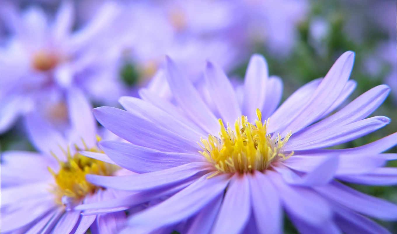 цветы, макро, качестве, yellow, хорошем, лепестки,