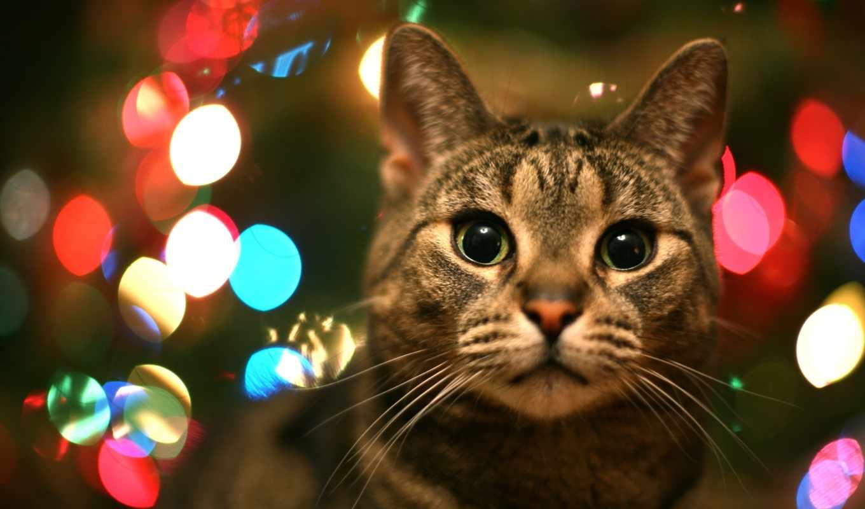 столе, рабочем, кот, год, christmas, кошки, коты, котята, мужской,
