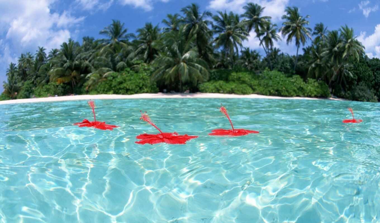 красивые, места, в мире, море, остров, вода, прозрачная, пальмы, отдых, красные, цветы,