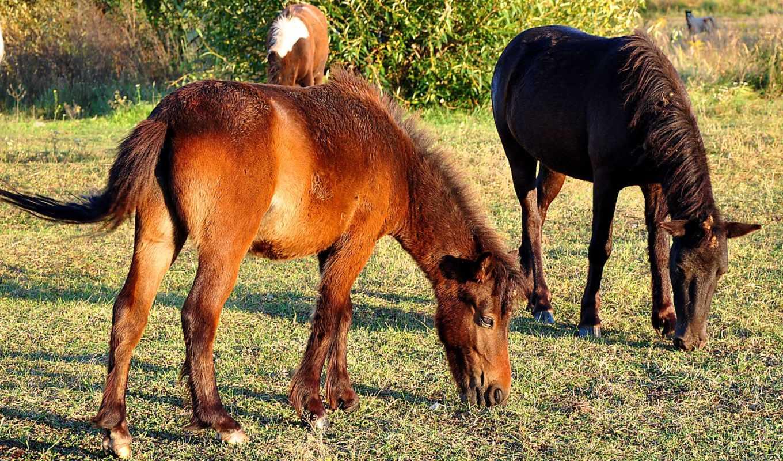 squirrell, horses,