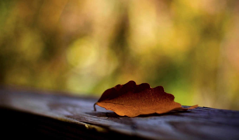 priroda, osen, совершенно, категория, makro, размытость,