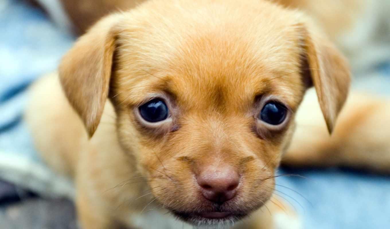 собак, всем, domésticos, смешные, animais, португалия,