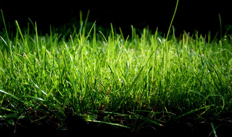 трава, зелёная, совершенно, свой,