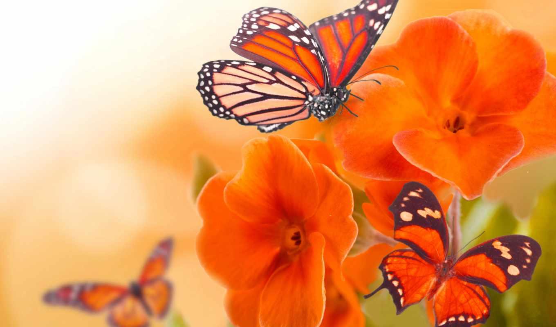 природа, картинка, макро, бабочка, цветах, разных, cvety, фотоколлаж, бабочки,