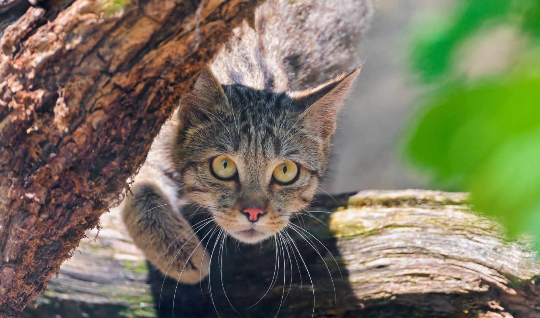 cats, images, fishko, кошки, pinterest, funny, wild, кот,