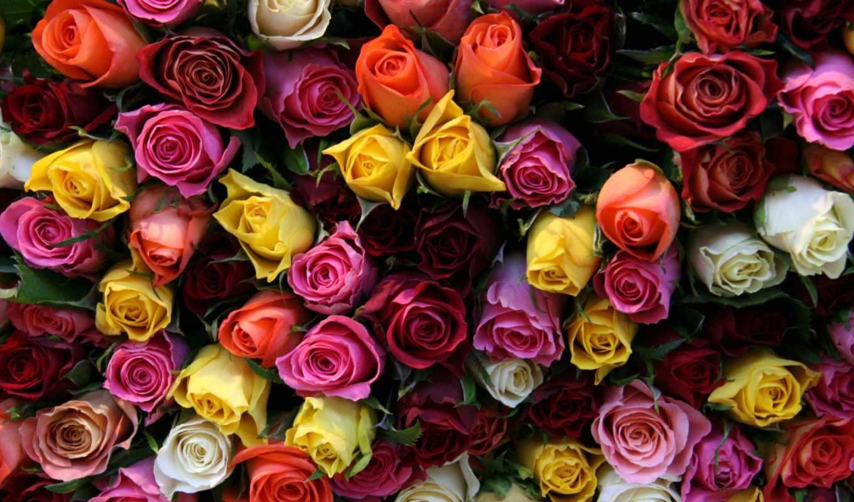 розы, букет, cvety, просмотреть, композиция,