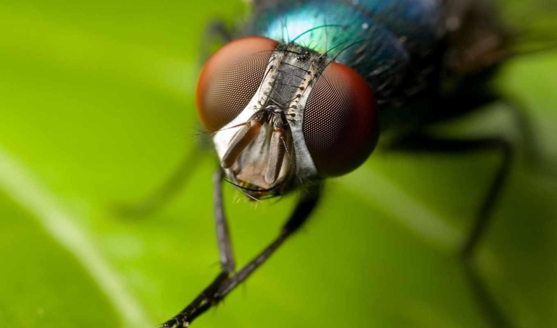 moscas, para, que, muitas, mãos, elas, mosca, pousam,