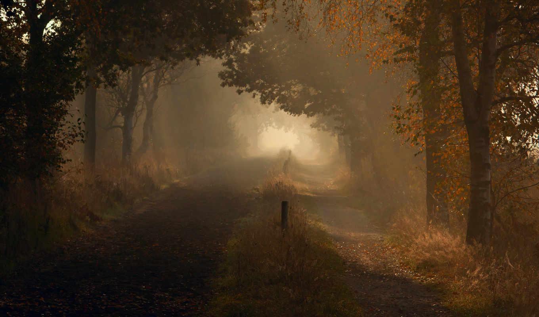 дорога, осень, природа, утро, свет, forest, dim, капли,