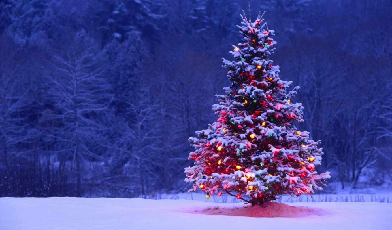 дерево, огни, снег, подсветка, год, new, ночь, winter,