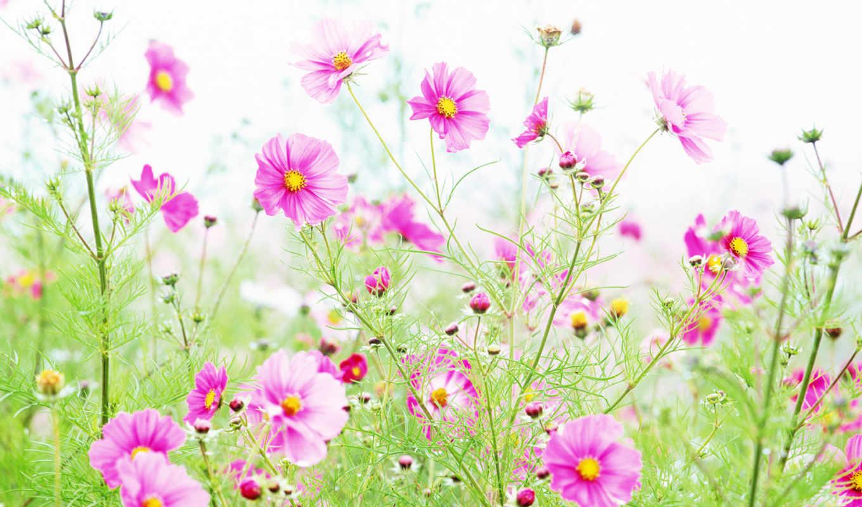 cvety, сегодня, цветочки,