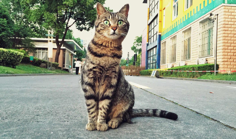 ,серый кот, cats, кот,