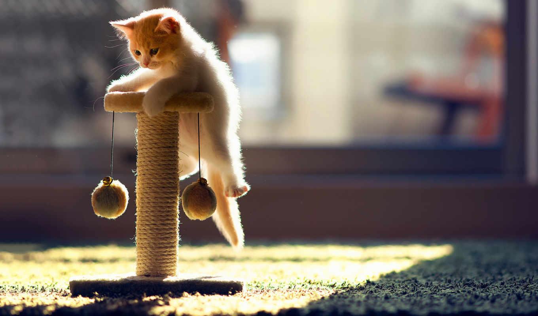 купить, кошек, кошки, hannah, когтеточку, котенок, когтеточек, когтеточкой, бен, когтеточка, torode,